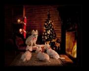 Christmas-Tails.jpg