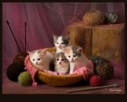 Gena-Tussey_ Knittin' Kittensb