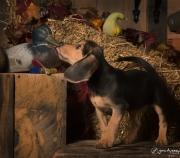 beagle-184