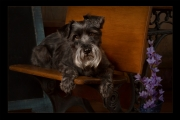 Gena_Tussey_Teacer's-Pet