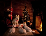 Mr Peabody's Christmas tails